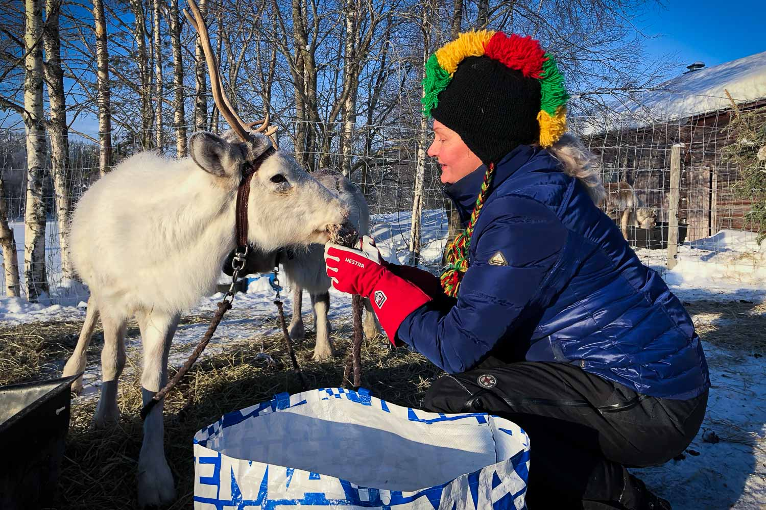 Mother of Swedish reindeer herder: Hunting our animals is out of the question